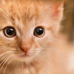 子猫のアップ