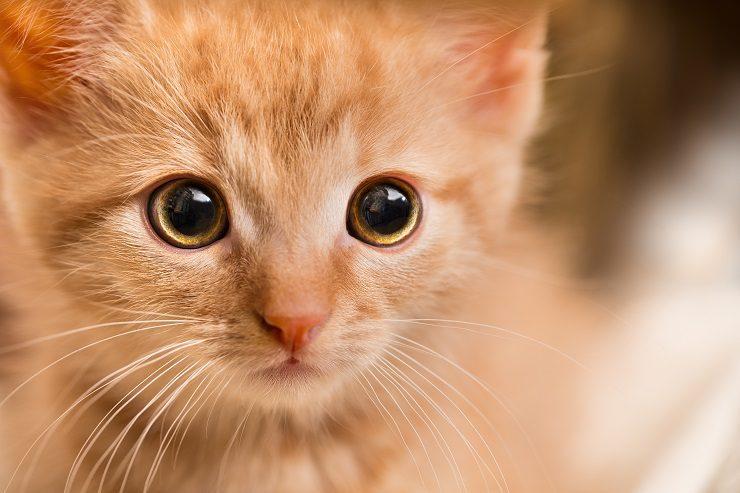 目薬 猫 結膜炎 【獣医師監修】猫の結膜炎の症状・原因・治療法 自然治癒する?|ねこのきもちWEB