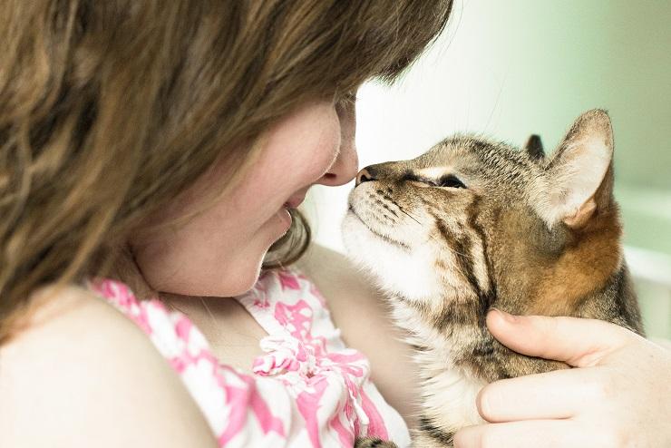 飼主の顔に鼻を付ける猫