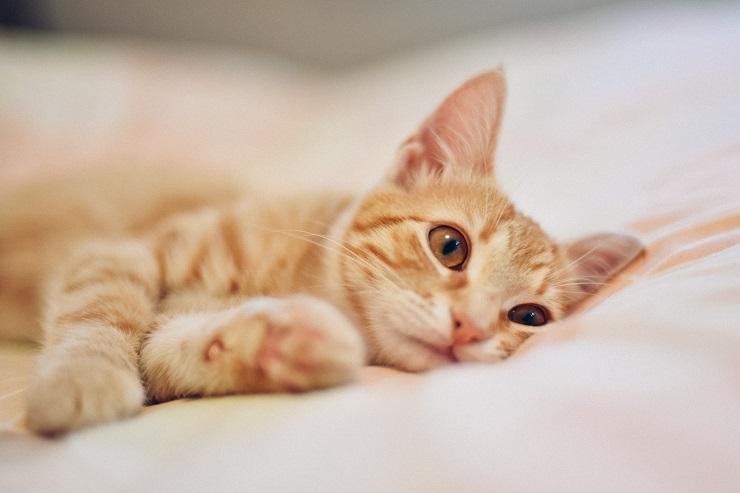 まったりしている猫