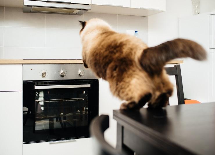 オーブンに向かってジャンプする猫