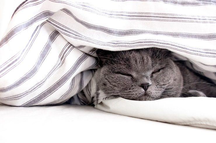 の 猫 布団 匂い 消し 子 の 押し っ