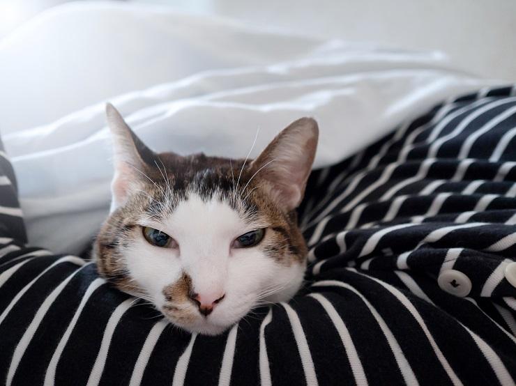 人の腕を枕にする猫