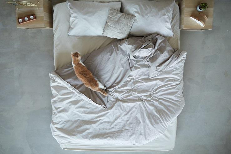 ベッドの上を歩き回る猫
