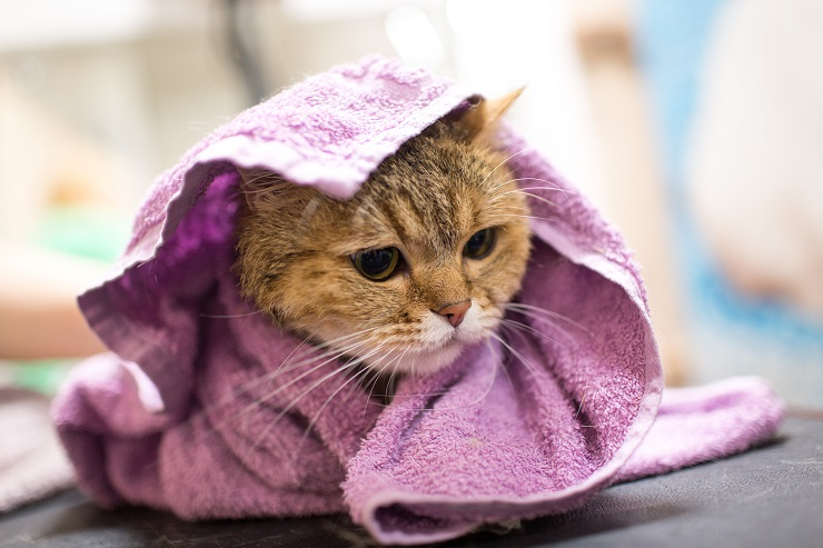 タオルに包まれた猫