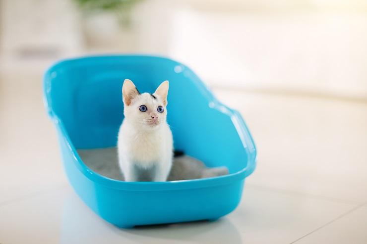 トイレで排泄している猫