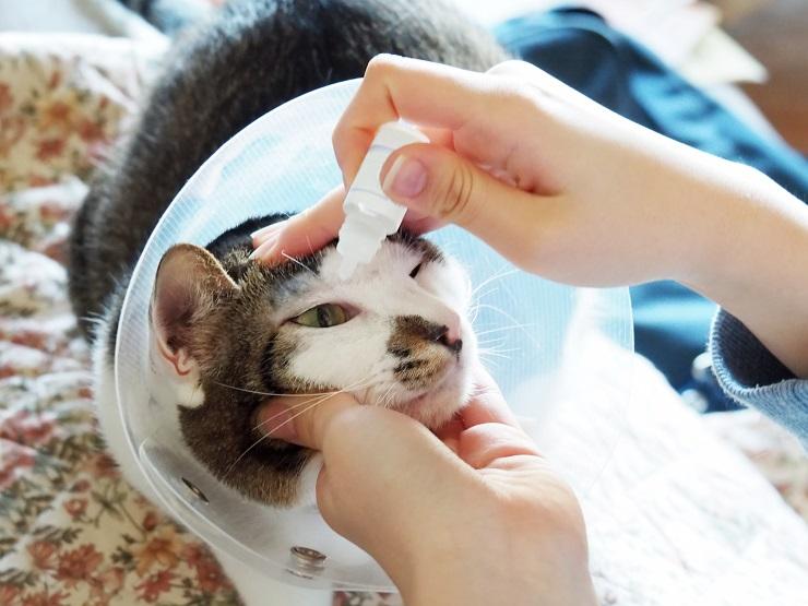 目薬をさしている猫