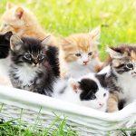 籠に入った色んな種類の子猫