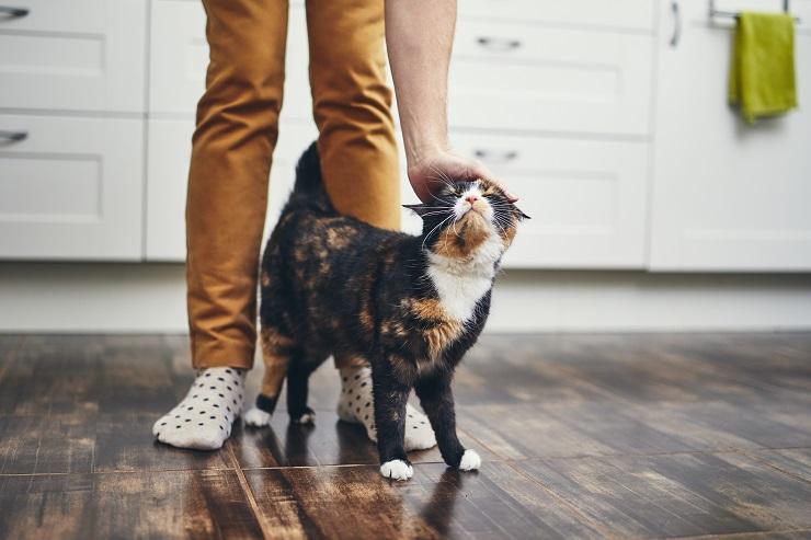 足元でスリスリする子猫