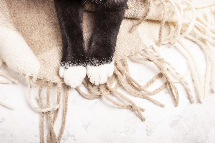 白いソックスを履いたような猫の前足