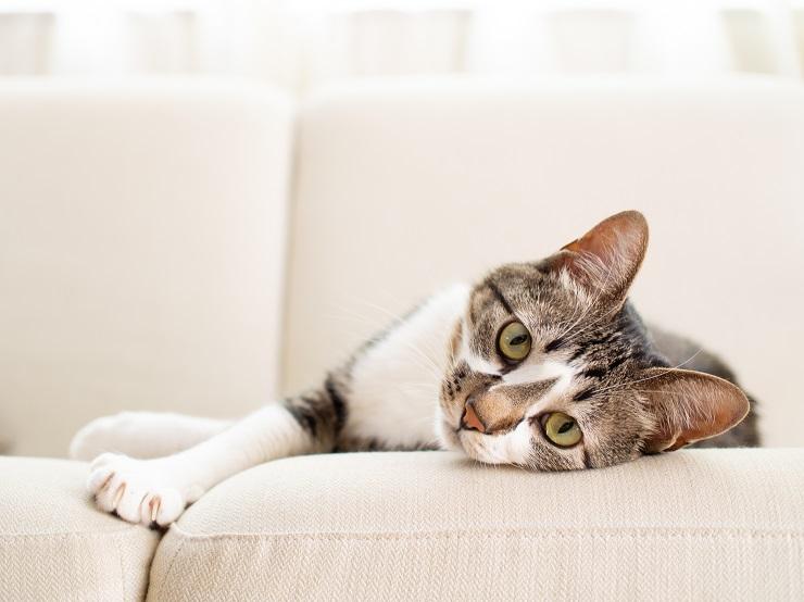 ソファの上でくつろぎながらこちらを見ている猫