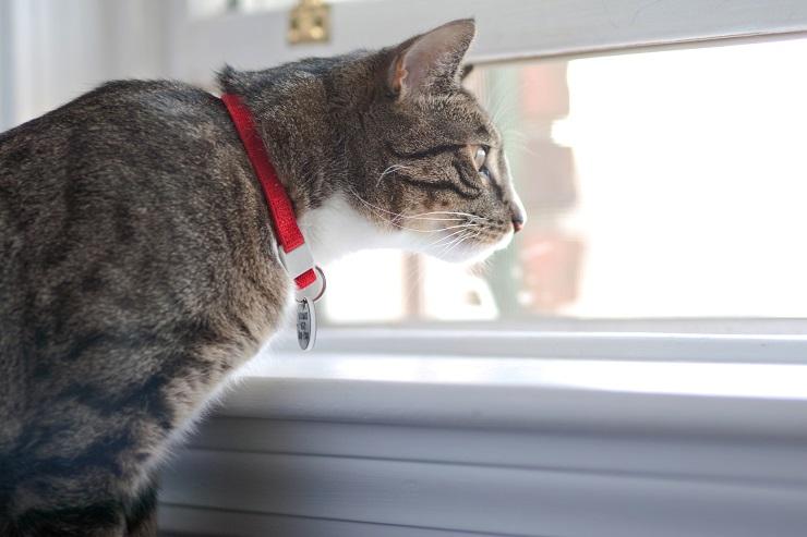 窓辺から外を眺める猫