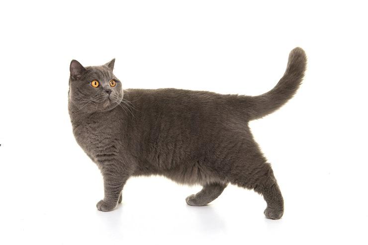 お腹の肉がたるんでいる猫