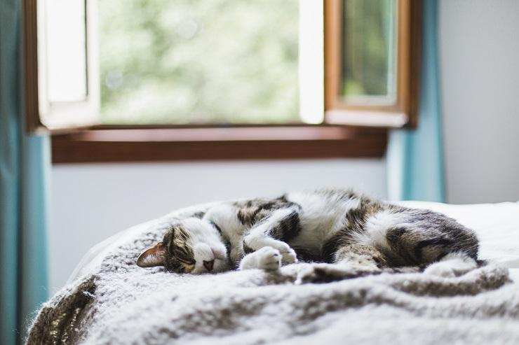 ぐったりと寝ている猫