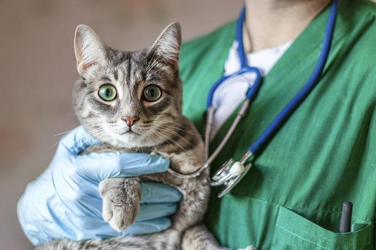 獣医に抱かれてこちらを見つめる猫