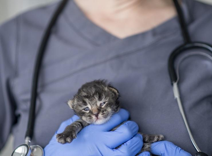 獣医師の腕に抱かれる子猫