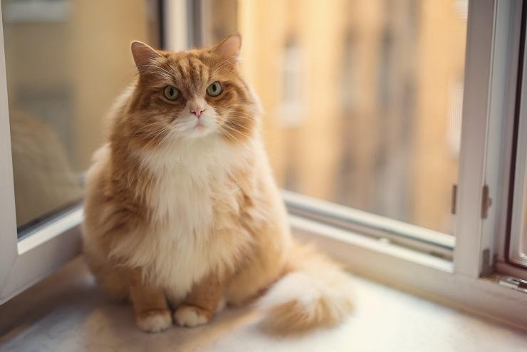 窓辺に座るぽっちゃり猫