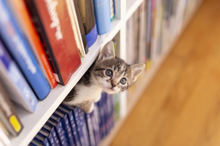 本棚から顔を出すかわいい子猫