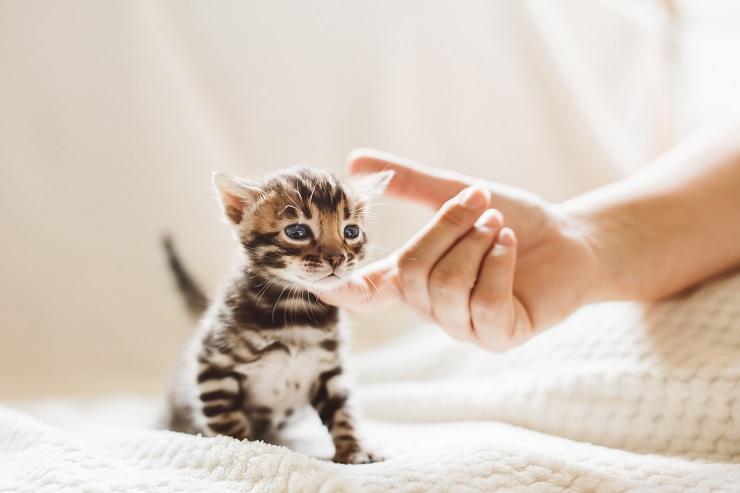 あごをなでられるかわいい子猫