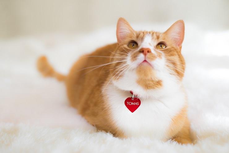 赤いハート型のネームプレートを下げている猫