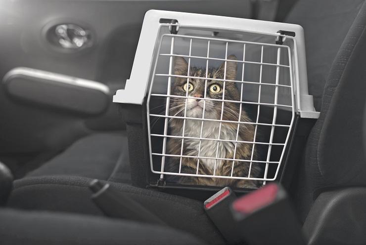 猫が入っているキャリーケースがある車の助手席