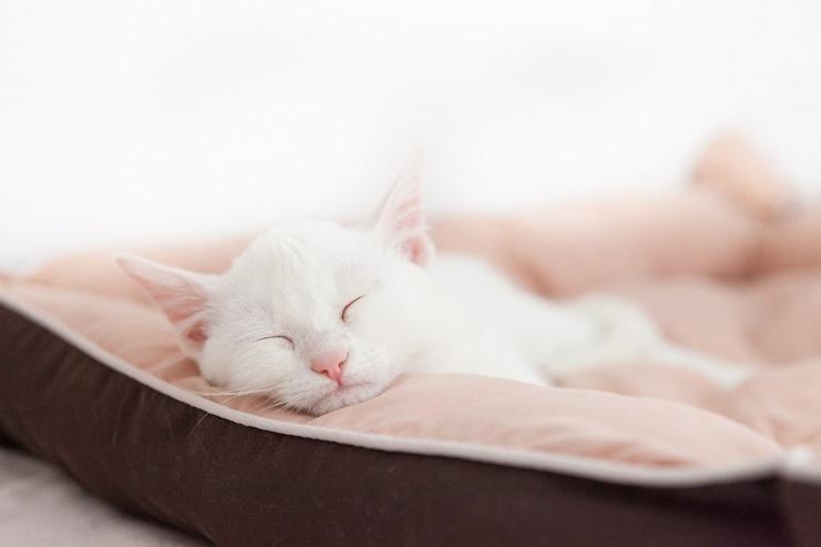疲れたように眠る白猫