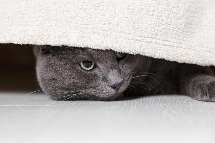 ベッドの下からこちらをじっと観察している猫