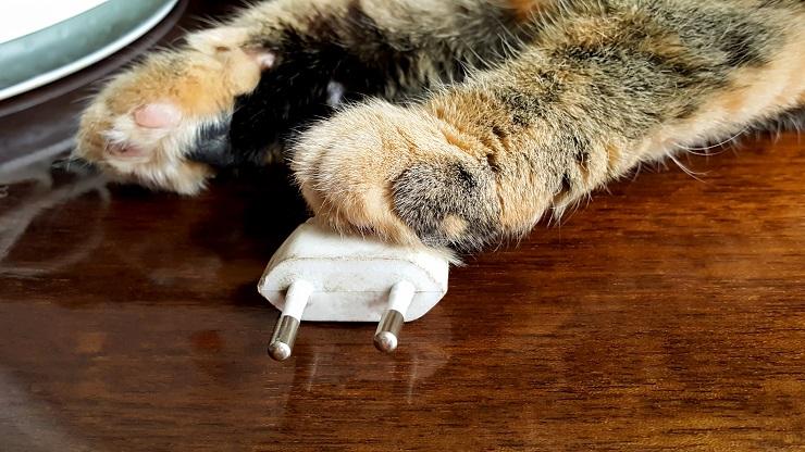 コンセントから抜けたプラグに前足を置く猫