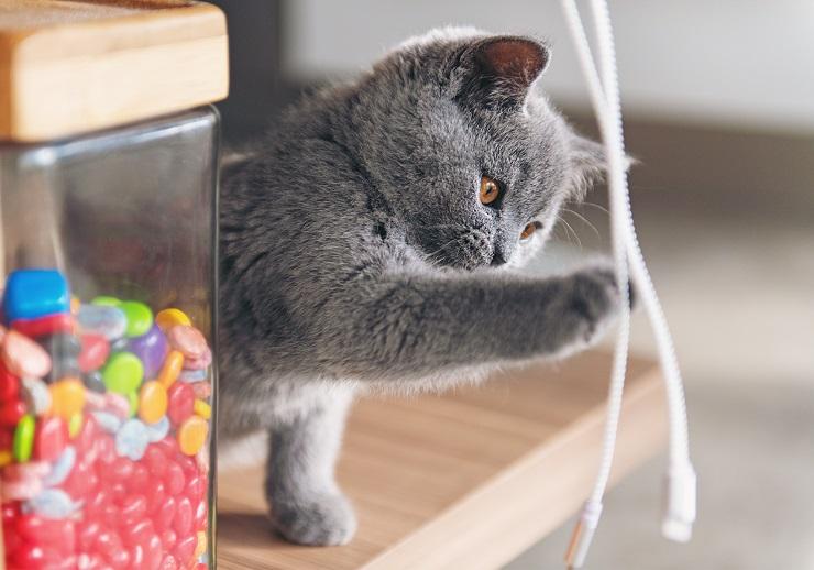 コードにじゃれる子猫