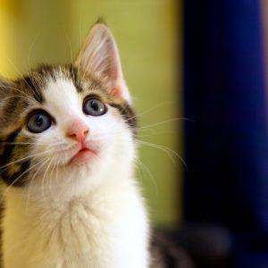見上げるかわいい子猫