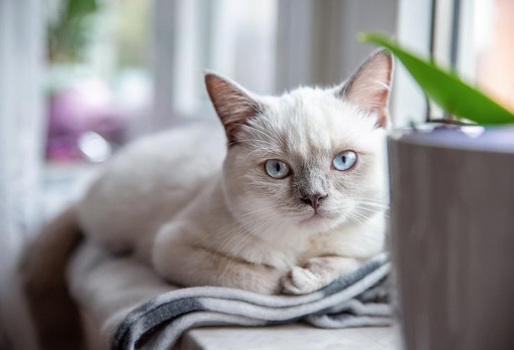 こちらをじっと見る白猫