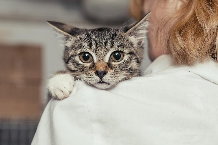 獣医師の方にアゴを載せる猫