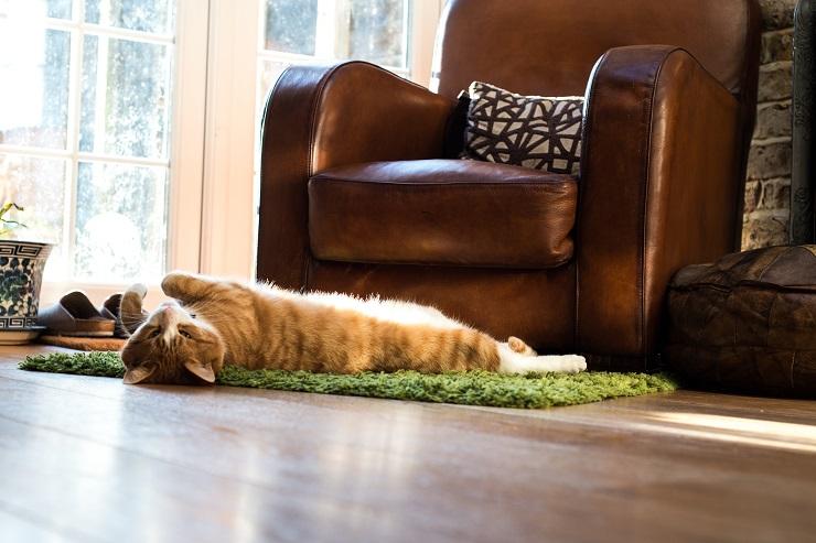 部屋で伸びて寝ている猫