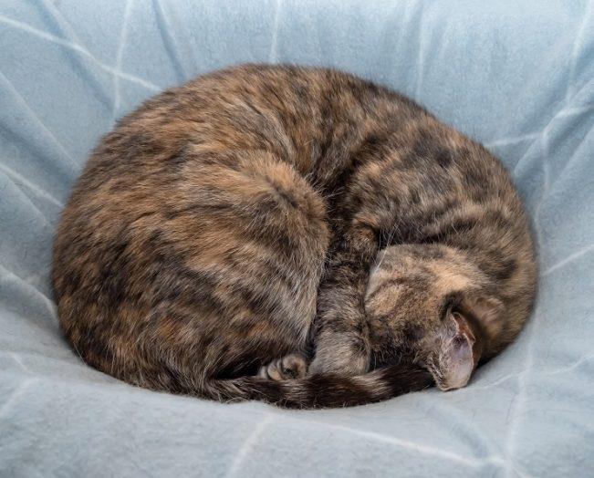 猫のアンモニャイト