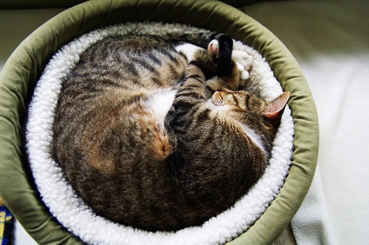 猫ベッドで丸まる猫