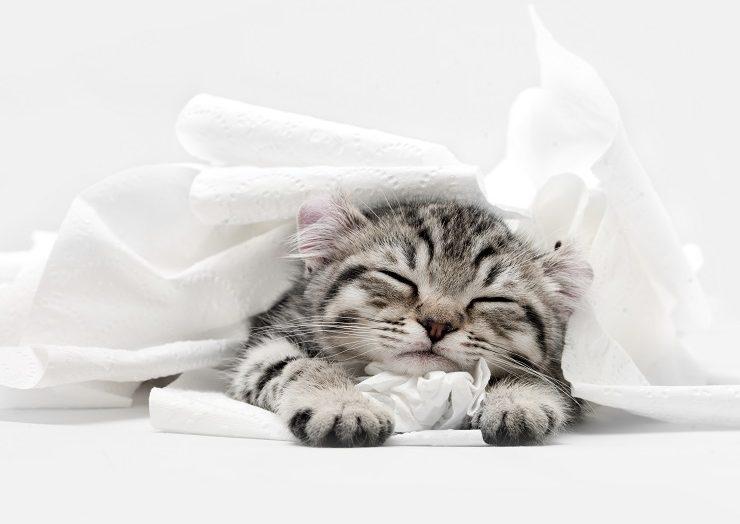 白い布に埋もれて寝る子猫