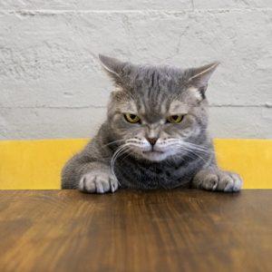 ムカついている猫