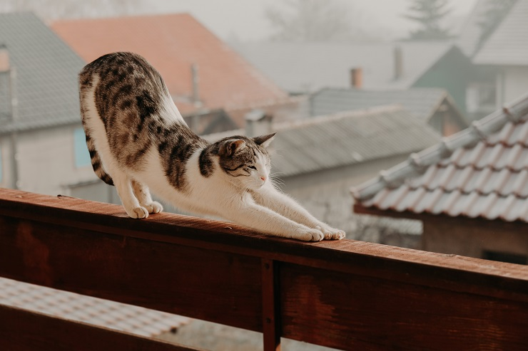 伸びをする猫