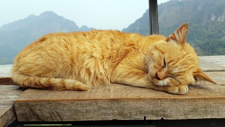 窓辺で寝ている猫