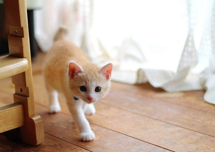 忍び歩きをする猫