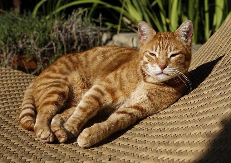 チェアの上で休んでいる猫