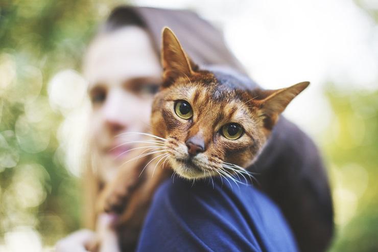 女性の肩に顔をのせる猫