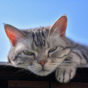 晴天のもと、眠そうな猫
