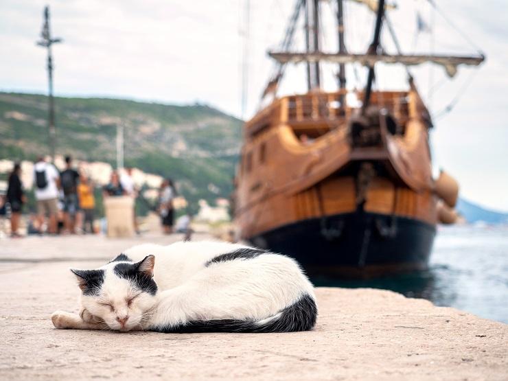 港で眠る猫