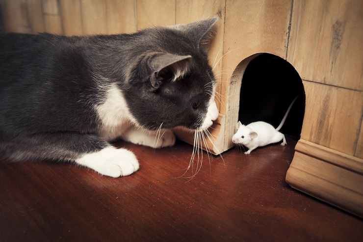 ネズミとにらめっこをする猫