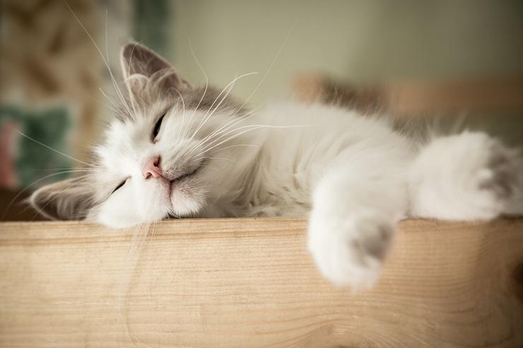 退屈そうに眠る猫