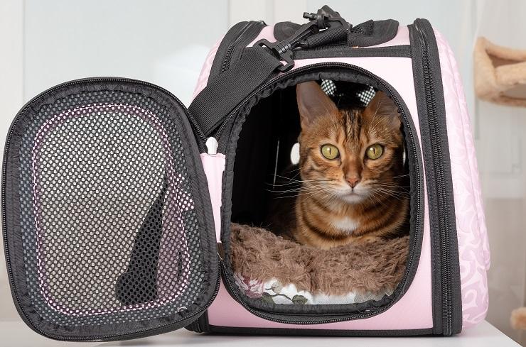 キャリーバッグに入っている猫