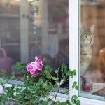 窓辺で外を見つめる猫