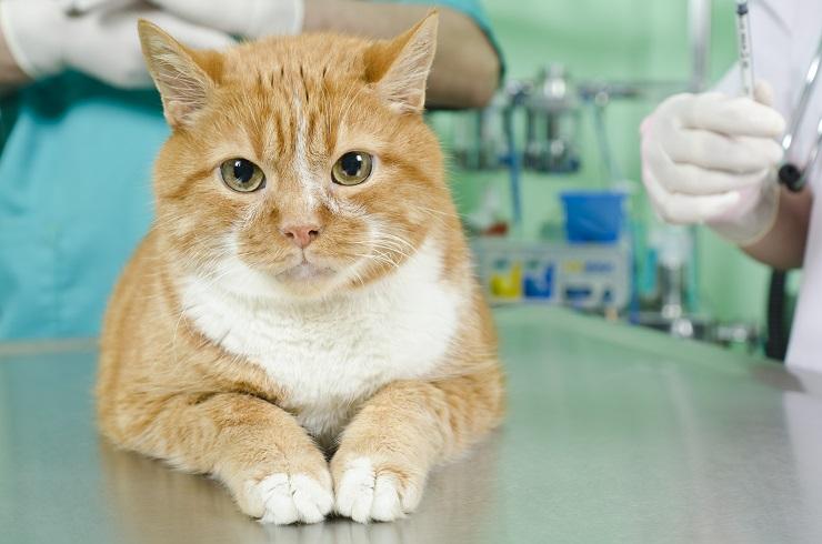 病院で診察を受けようとしている猫