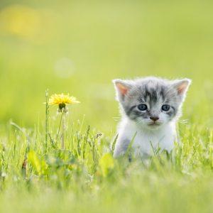 野原にひとりぼっちでいる子猫